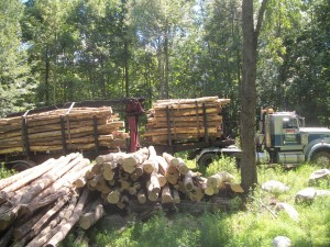 Log length fire wood for sale in the Hudson Valley, NY